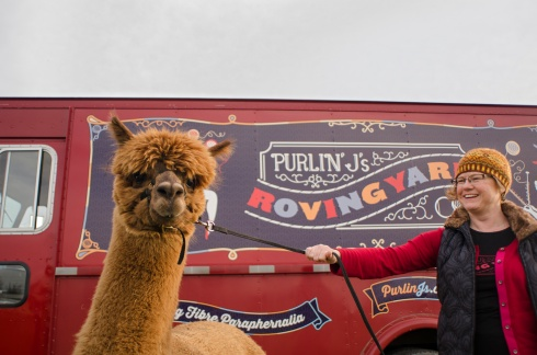 Purlin J _Alpacas 048